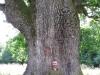 Stejar multisecular Platoul Breite
