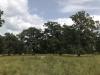 stejari-multiseculari-platoul-breite5