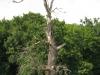 stejari-multiseculari-platoul-breite6