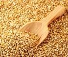 Quinoa, cereala incasilor