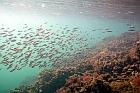 Temperatura apei Mării Negre | Apa mării grade