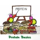 Aportul de proteine în alimentaţia vegetariană
